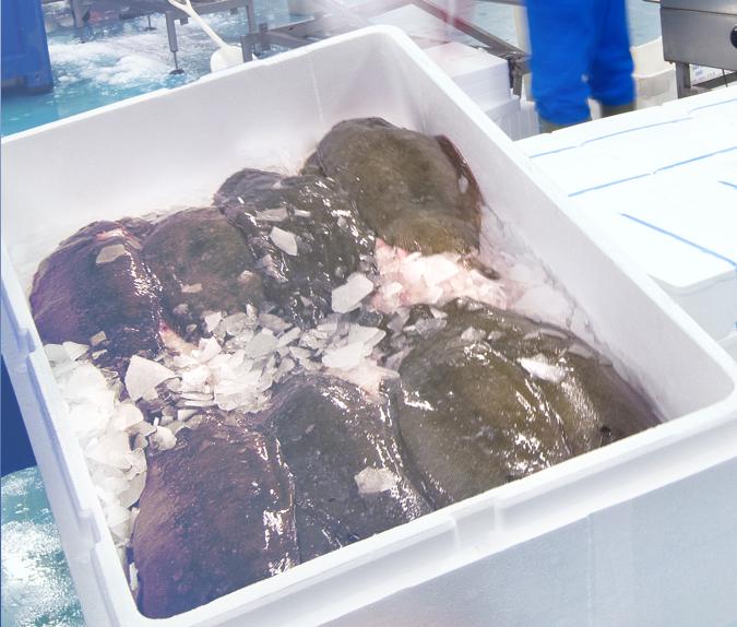 EPS doos met vis
