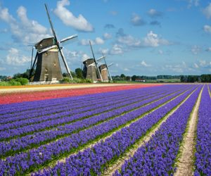 Dutch-Windmill-sustain